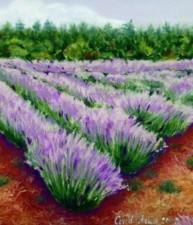 Lavender Farm #1