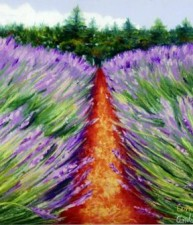 Lavender Farm #2